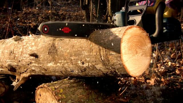 chainsaw - bahçe ekipmanları stok videoları ve detay görüntü çekimi