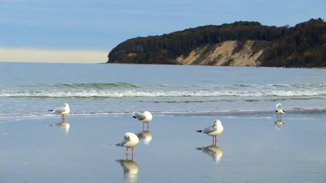 Chalk-cliff with gulls in Rügen video