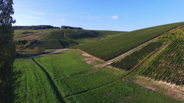 Champagne vineyards in the Cote des Bar area of the Aube department near to Les Riceys, Champagne-Ardennes, France, video