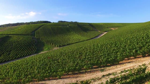 Champagne vineyards in the Cote des Bar area of the Aube department near to Les Riceys, Champagne-Ardennes, France,