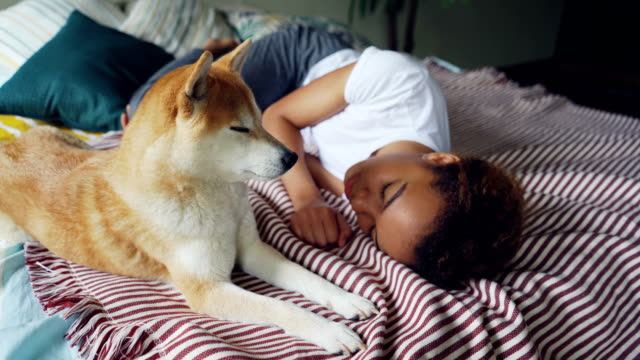 charming african american lady is sleeping on wooden bed with modern linen while her cute loyal dog is lying beside her and licking its muzzle. - fedeltà video stock e b–roll