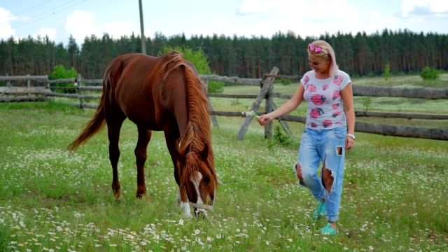 Charming blonde feed the horse on a green meadow video
