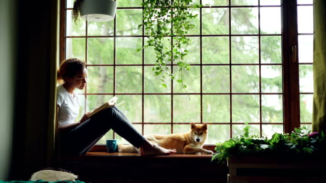 Charming female student African American girl is reading book sitting on windowsill near lovely pet dog lying beside her. Home, hobby and animals concept. Charming female student African American girl is reading book sitting on windowsill near lovely pet dog lying beside her. Home, hobby and domestic animals concept. hobbies stock videos & royalty-free footage