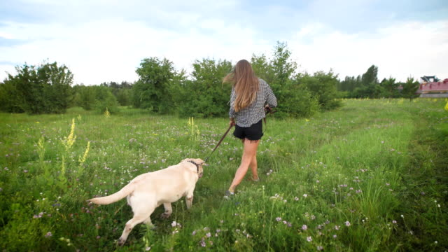 charming young woman and white labrador are running in a field in summer evening near cottages in countryside video
