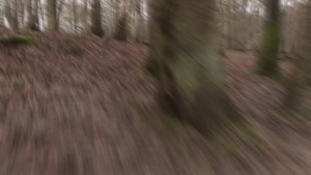 Chased through empty eerie Forest through the trees - Running Stock video clip footage of a person running through an empty forest, being chased. The camera is handheld and very jerky. The eerie woods, were filmed in Autumn or Winter, with the leaves on the floor and the trees empty. There are lots of fallen branches on the floor. jerky stock videos & royalty-free footage