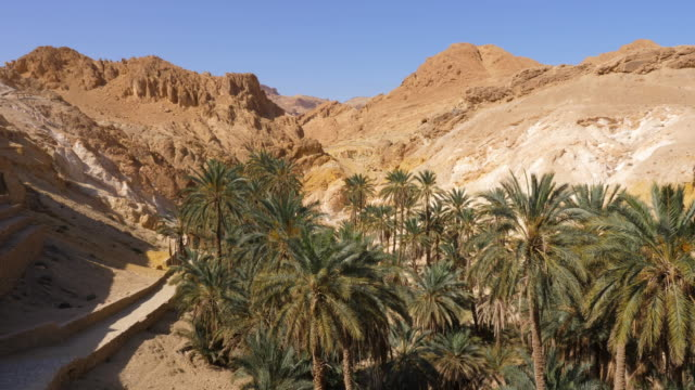 Chebika oasis in mountain canyon with palm trees, tilt view
