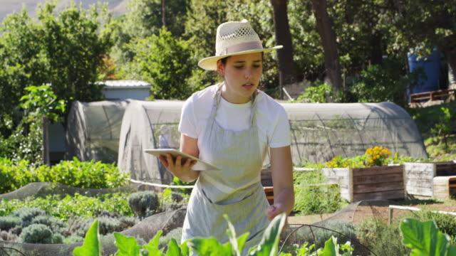 vídeos de stock e filmes b-roll de checking if everything is growing as predicted - agricultora