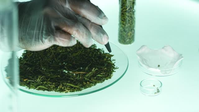 kollar medicinsk marijuana. laboratorietester - hasch bildbanksvideor och videomaterial från bakom kulisserna