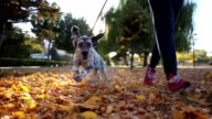 istock Cheerful dog and it's owner running in a park 1053614064