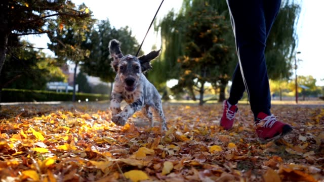 Cheerful dog and it's owner running in a park Adult man in sports clothing walking his hunting dog through a city park in autumn. recreational pursuit stock videos & royalty-free footage