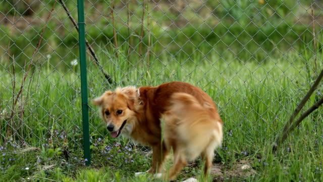 Cheerful dog running in backyard video