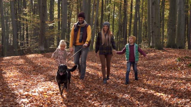 glad familj med hund promenera i skogen - hund skog bildbanksvideor och videomaterial från bakom kulisserna