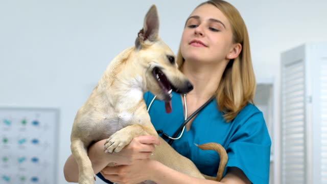 glad kvinnlig vet holding bedårande hund leende på kamera, pet health care - veterinär bildbanksvideor och videomaterial från bakom kulisserna