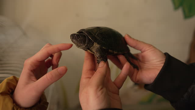Cheerful female visitor, petting the exotic turtle at the animal rescue center