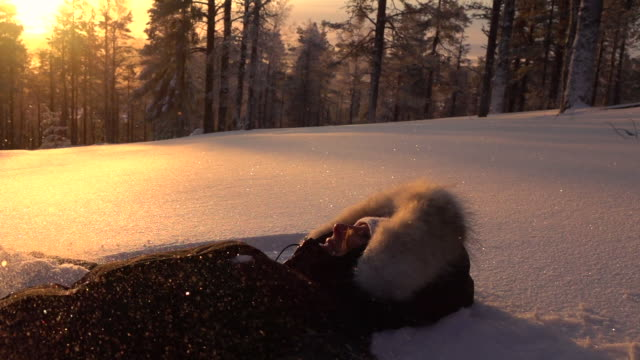 SLOW MOTION: Cheerful girl lying in snow on mountaintop at golden light sunset video