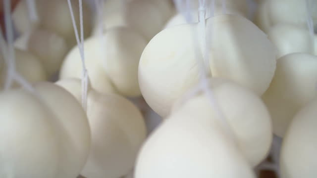 cheese at the dairy, cheese is ripen on wood racks video