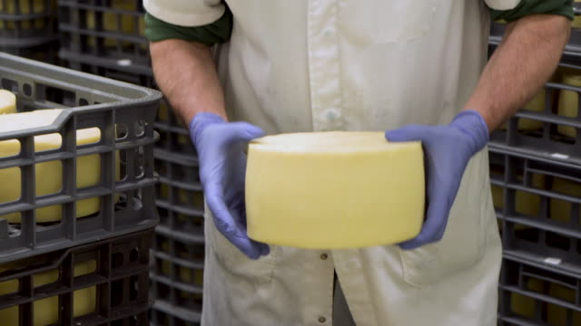 Cheese maker holding cheese wheel at the cheese storage during the aging process. Cheese maker holding cheese wheel at the cheese storage during the aging process. cheese stock videos & royalty-free footage