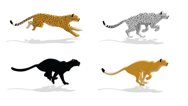 Cheetah Animal Run Cycle Animation