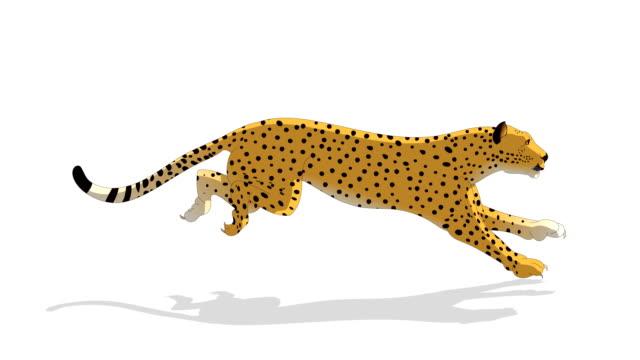 チーターアニマルランサイクルアニメーション - ネコ科点の映像素材/bロール