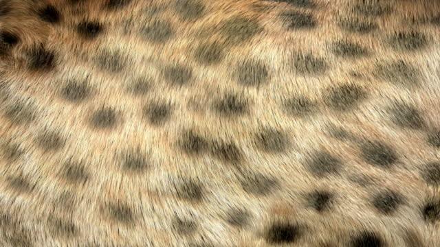 Cheetah fur 3D animated background