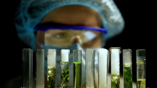 chemist observing reaction in tubes with plants, alternative fuel development - canna da zucchero video stock e b–roll