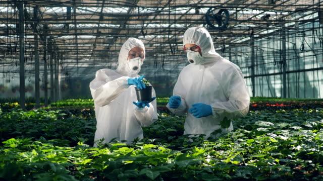 i chimici che indossano la sicurezza osservano un impianto - fertilizzante video stock e b–roll
