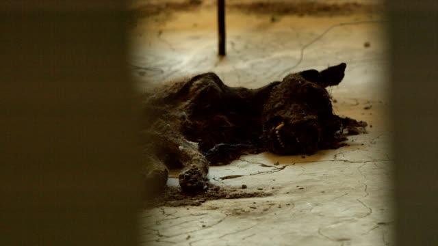 Chernobyl - Rotting Dog Corpse video