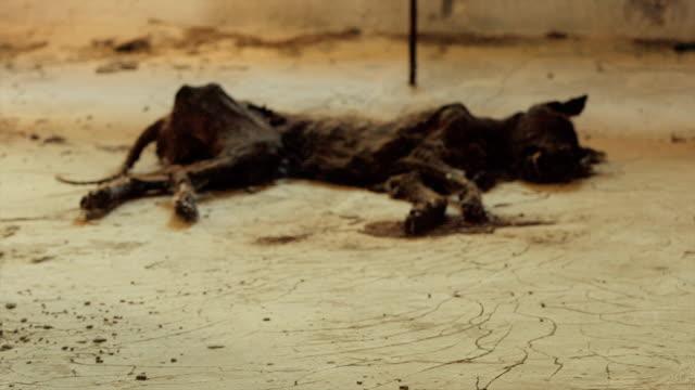 Chernobyl - Rotting Dog Mummy video