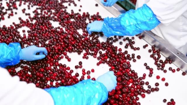 Bидео Cherries on a conveyor belt.