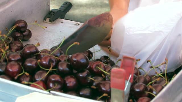 Cherries on the market video