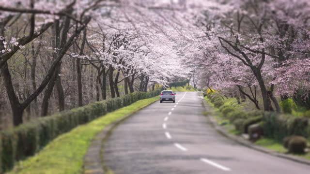 Fleurs de cerisier, à 4 k-arch - Vidéo