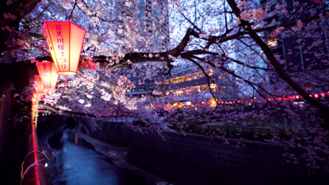 cherry blossom at meguro river. tokyo, japan - cherry blossom stock videos and b-roll footage