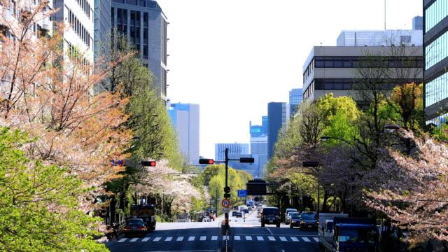 Kirschblüte in der Yasukuni-Straße in Tokio – Video