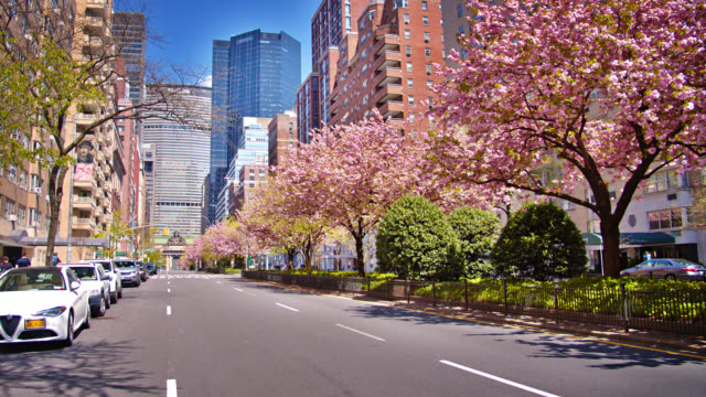 봄에는 6번가에 벚꽃이 만발합니다. 전염병 후 성장, 경제 회복의 개념적 상징 - 도시 거리 스톡 비디오 및 b-롤 화면