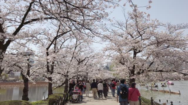 上野公園東京の桜が落ちてくる - 桜点の映像素材/bロール