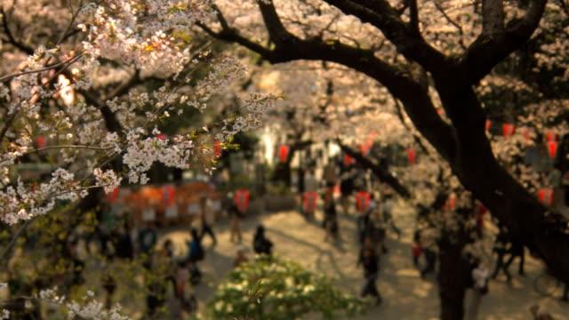 Cherry Blossom festival in Ueno Park, Tokyo video