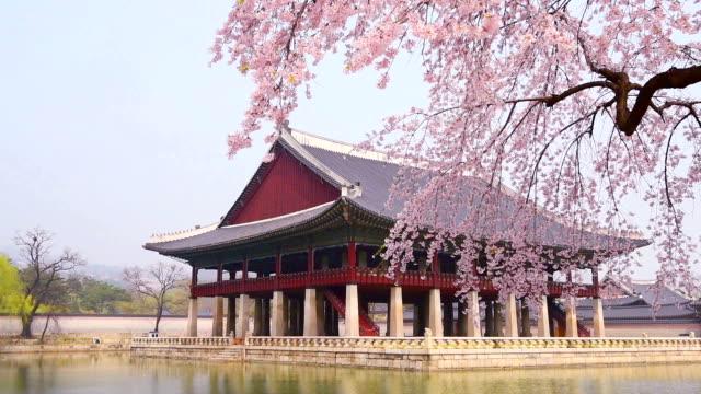 桜の花の春の景福宮は、ソウル、韓国 ビデオ