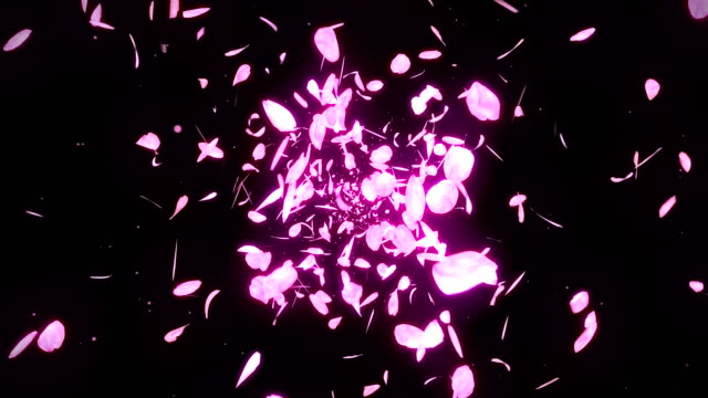 Cherry Blossom Petals Falling on Black Background, Loop Glitter Animation, Cherry Blossom Petals Spin Loop CG Animation hovering stock videos & royalty-free footage