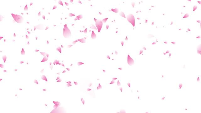 vídeos y material grabado en eventos de stock de pétalos de flor de cerezo cae fondo blanco - pétalo