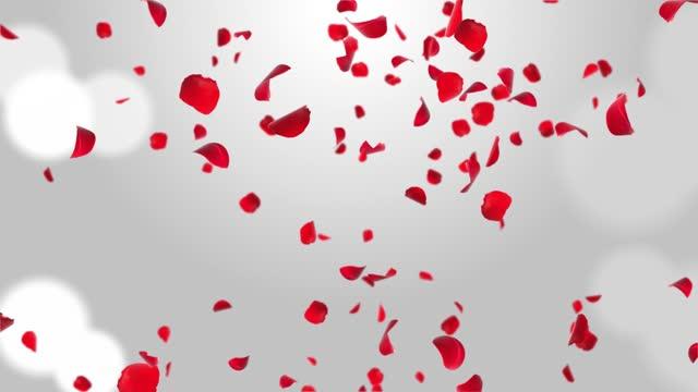Cherry Blossom Rose Petals Realistic Petals Falling Loop Animation Green Screen.