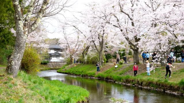 Cherry Blossoms and Tranquil River at Oshino Hakkai, Slow Motion Shot