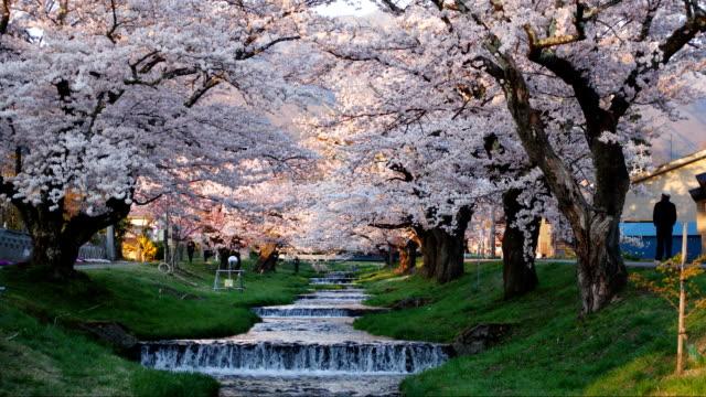 川桁福島の桜です。 - デイフェンス点の映像素材/bロール