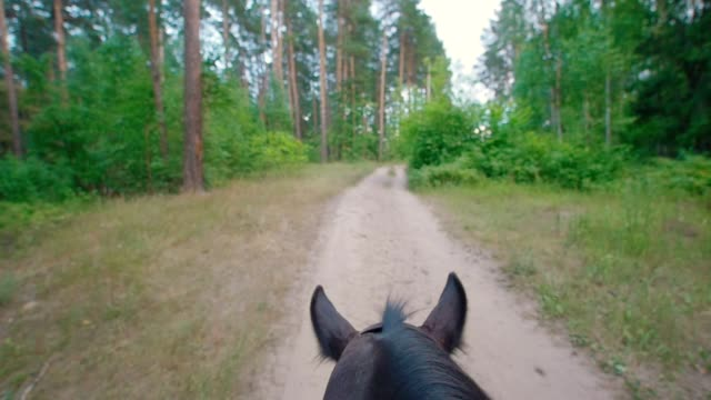 chestnut horse rides through the pathway in forest - criniera video stock e b–roll
