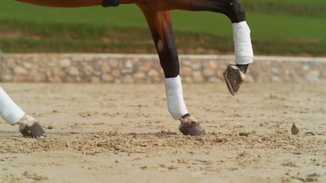 närbild: kastanj hingst med bandagerade ben cantering i arenan sandstranden. - häst tävling bildbanksvideor och videomaterial från bakom kulisserna