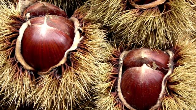guscio di spine di castagno, frutta secca di stagione in autunno - marrone video stock e b–roll