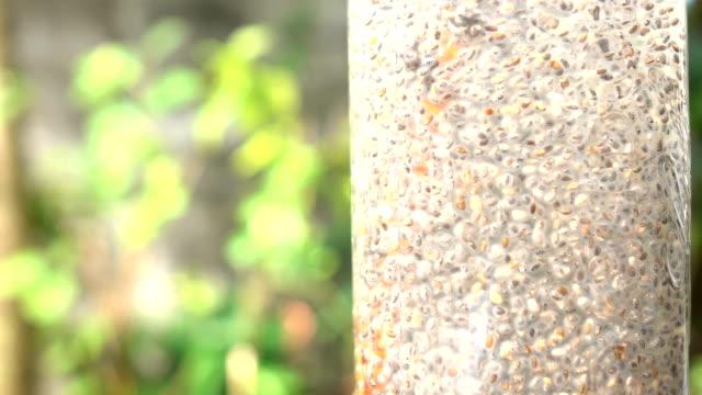 chiafrön sugit upp i vattenglas i slow motion - ancient white background bildbanksvideor och videomaterial från bakom kulisserna
