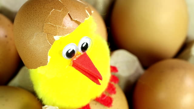 stockvideo's en b-roll-footage met chick with egg shell - chicken bird in box
