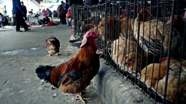 tavuk çin pazarında satışa - kafes sınırlı alan stok videoları ve detay görüntü çekimi