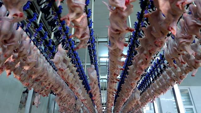 vídeos de stock, filmes e b-roll de frango na exploração avícola, a linha de processamento. linha de produção de carne de frango. planta de processamento de alimentos. indústria de alimentos. fábrica de alimentos. - ave doméstica