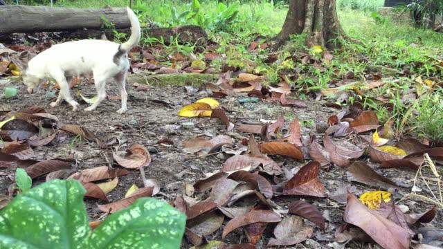 公園でリラックスしたチワワ犬 - 愛玩犬点の映像素材/bロール